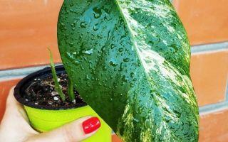 7 народных способов победить паутинного клеща и спасти домашние растения