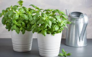 5 комнатных растений, которые обладают сильными лекарственными свойствами