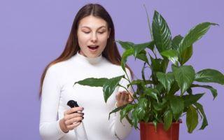 Ошибки в уходе за комнатными растениями, которые совершают даже бывалые цветоводы