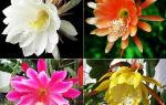 Семь поводов для разведения эпифиллума