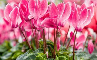 Садовые цветы, которые не нужно проращивать