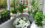 5 причин появления мошек на комнатных растениях