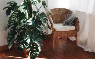 7 напольных растений, которые украсят ваш дом