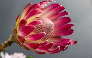Прозрачные цветы, листья-спирали: 8 комнатных растений с необычным видом