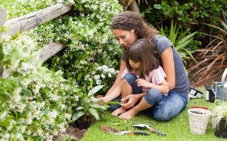 Самые неприхотливые лианы, которые стоит посадить в саду