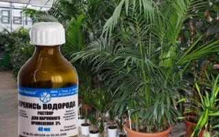 Можно ли поливать комнатные цветы перекисью водорода?
