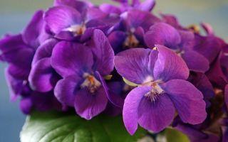 При правильном уходе 8 растений будут цвести круглый год