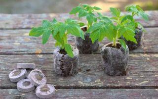 Выращиваем рассаду на подоконнике: 5 технологичных приспособлений, с которыми вас ждет богатый урожай