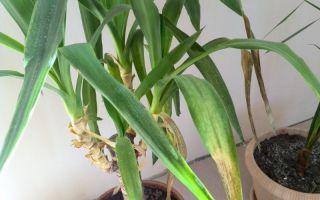 Избыток удобрений: как понять, что комнатные растения перекормлены