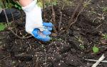 Чем подкармливать кустарники и деревья весной, чтобы получить большой урожай