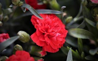 Какие цветы флористы не советуют дарить женщинам