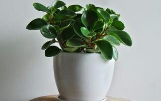 11 растений-фильтров, которые помогут очистить воздух в квартире