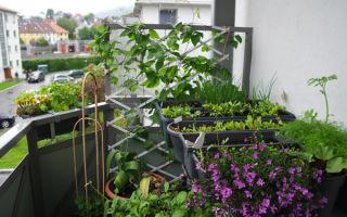 Мини-огород на балконе
