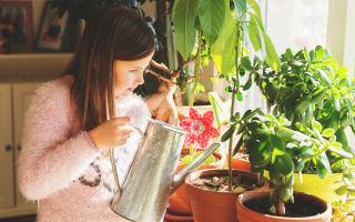 Простые способы не заливать домашние цветы