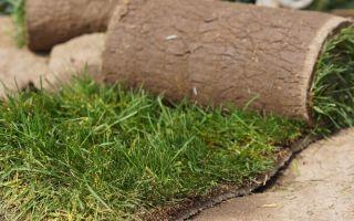 Как сделать питательную и легкую дерновую землю для комнатных растений