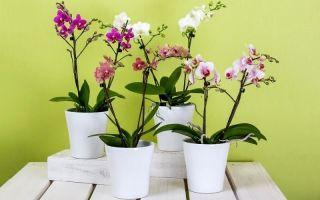 В каком горшке орхидее комфортнее всего: плюсы и минусы разных емкостей
