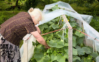 Как защитить урожай, пока вы отсутствуете на даче