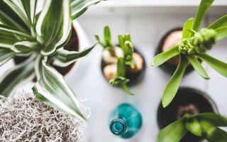 8 средств помогут избавиться от червяков и мошек, прячущихся в комнатных цветах