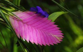 5 комнатных растений с прицветниками, которые ярче самих цветков