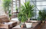 5 правил успешной адаптации комнатного растения к вашему дому после покупки