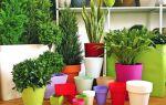 5 преимуществ пластиковых цветочных горшков перед глиняными