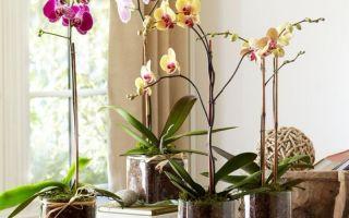 Как я вернула к жизни орхидею, которая осталась без корней