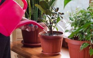 8 мощных стимуляторов роста комнатных растений, которые есть почти у каждой хозяйки