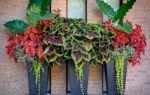 6 комнатных растений, листья которых могут конкурировать с самыми красивыми цветами