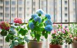 Что делать, чтобы в домашних цветах не заводились жучки