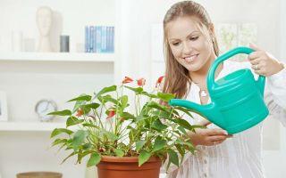Почему садоводы рекомендуют поливать цветы теплой кипяченой водой
