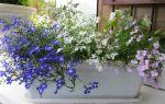 10 растений, которые порадуют цветением на балконе до осенних заморозков