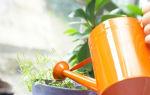 Чего вы добьетесь, если будете регулярно поливать комнатные растения пивом