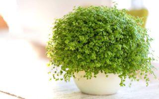 Для тех, у кого катастрофически мало места на подоконнике: 6 домашних растений-крошек