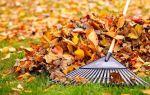 5 способов эффективного применения опавшей листвы