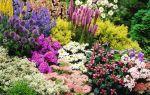 Самые неприхотливые дачные цветы для тех, у кого нет времени