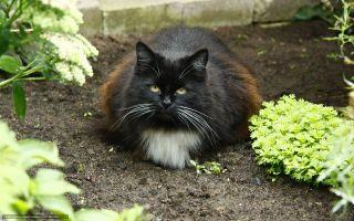 Коты на грядке: 10 простых вариантов, как их отвадить