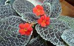 9 растений с мягкими и бархатистыми листьями, которые так и хочется потрогать
