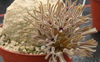 5 необычных домашних растений, которым позавидует любой цветовод