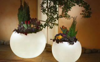 3 необычных способа использования старого плафона от светильника в качестве емкости для цветов