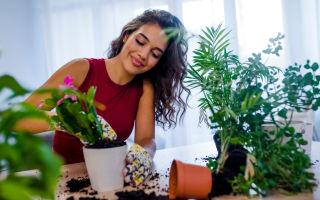 Самые популярные причины появления вредителей на домашних растениях
