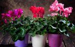 6 растений, которые положительно повлияют на наше эмоциональное состояние