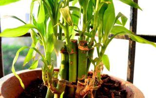 6 причин, по которым чернеют и сохнут кончики комнатных растений