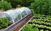 5 вещей в огороде, которые стоит прекратить делать