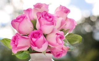6 неочевидных способов выяснить, насколько свежие розы в магазине