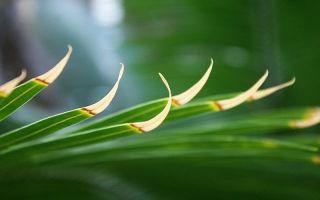9 причин, из-за которых кончики комнатных растений постоянно сохнут