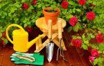 Бабушка научила меня укоренять розы из букета, теперь цветы украшают участок