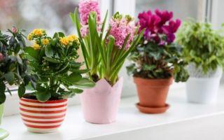 Не всем очевидные причины не ставить комнатные цветы на подоконник