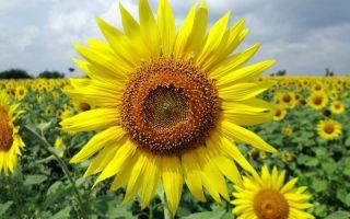 Чем европейские и восточные традиции дарения цветов отличаются от наших