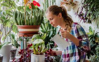 5 признаков перелива и 4 признака пересушки почвы у комнатных растений