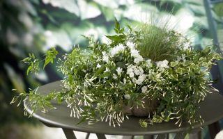 5 комнатных растений, которые снимают стресс и настраивают на позитив